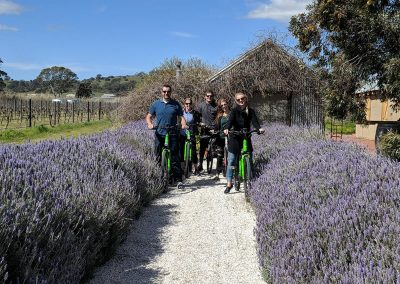 Nice photo of group on E-bikes at Hart of the Barossa near lavendar bushes
